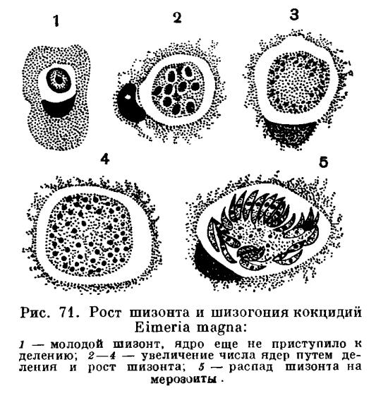 тройчатка от паразитов отзывы цена