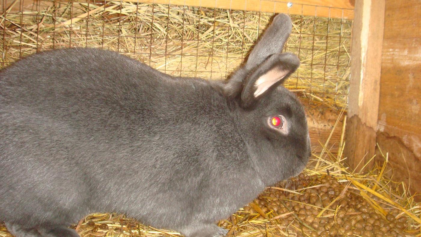 Стоимость выращивания кроликов 55