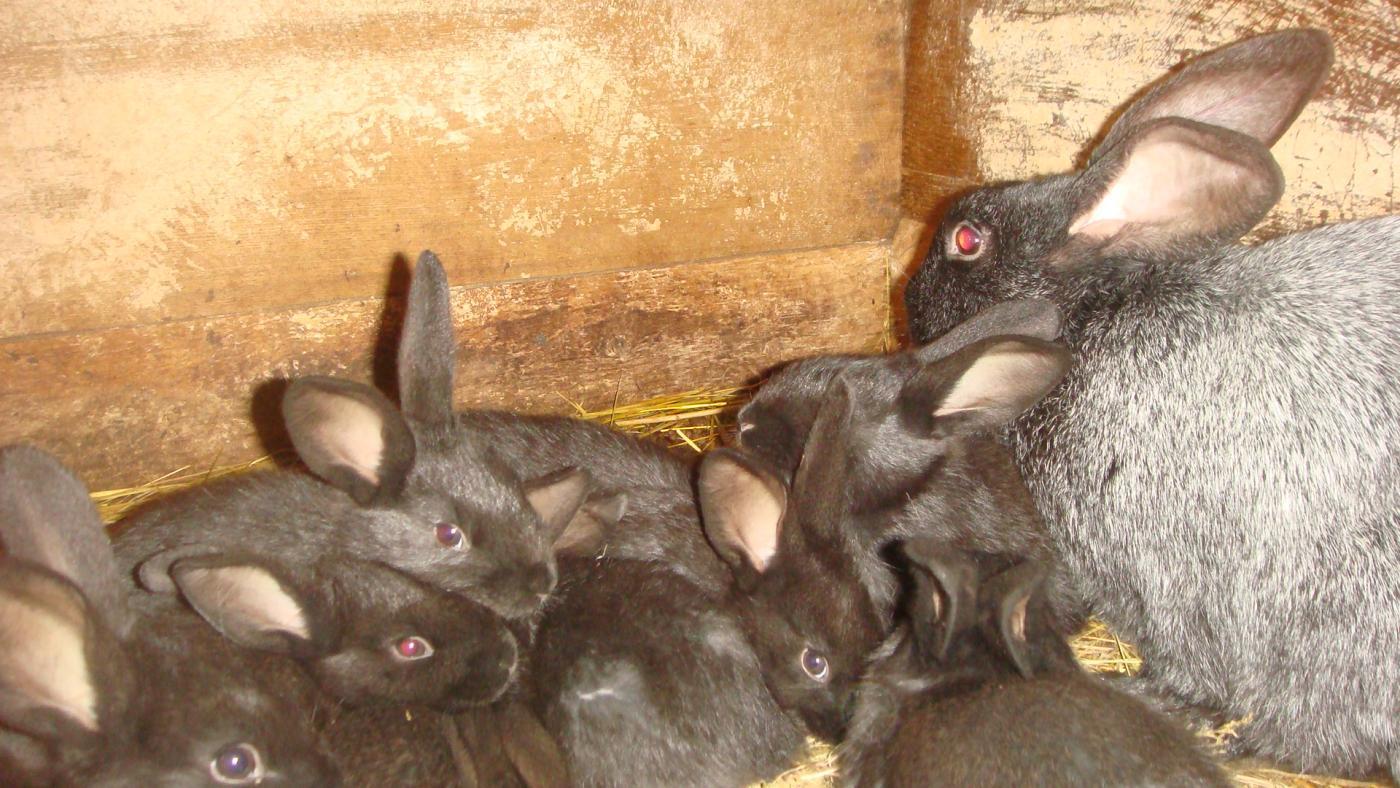 Как правильно ухаживать за кроликами в домашних условиях?