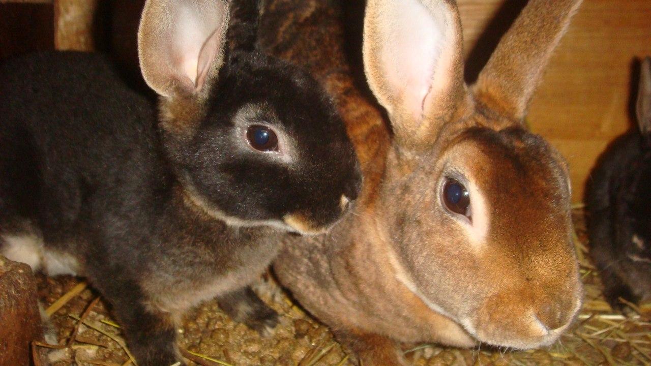 кролик 4 кг фото