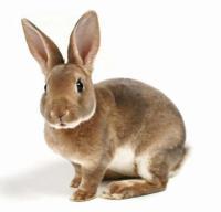 Кролик предпочитает...