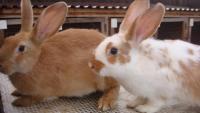 Разведение кроликов.Полезные советы...