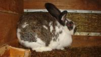 Как ухаживать за крольчатами...