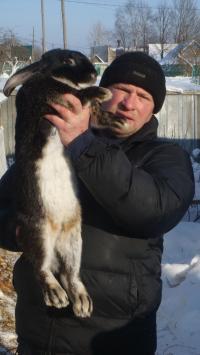 полезность кроличьего мяса