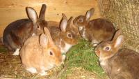 Кроличьи хоромы