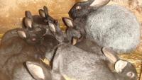 Кролик и летняя жара