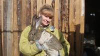 Почему нельзя давать кроликам траву.