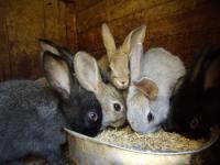 Витаминные добавки кроликам