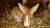 Еда для кроликов