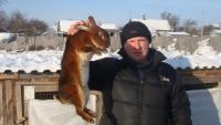 Рассказ о кролике Рекс