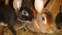 Кролики домашние и декоративные